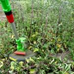 weeds2