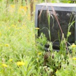 discarded old television on nature with some yellow daisies around