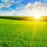 Retailers make hay while the sun shines