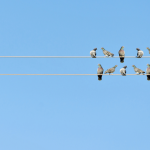 Why investing in index funds and blue chips is for the birds