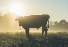 04092017 bull