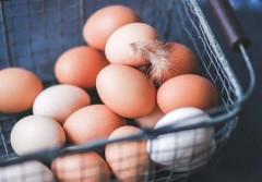 11052018 eggs