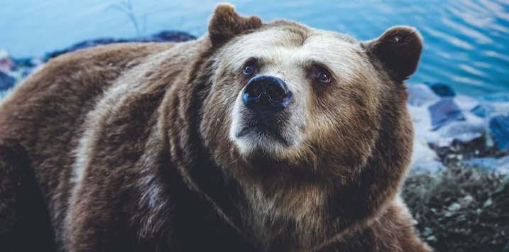 23102019_Bear market