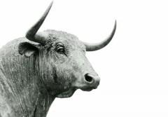 07022020_Bull market