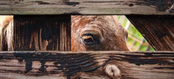 03062020_bull at a gate
