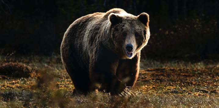 31082020_Bull or bear