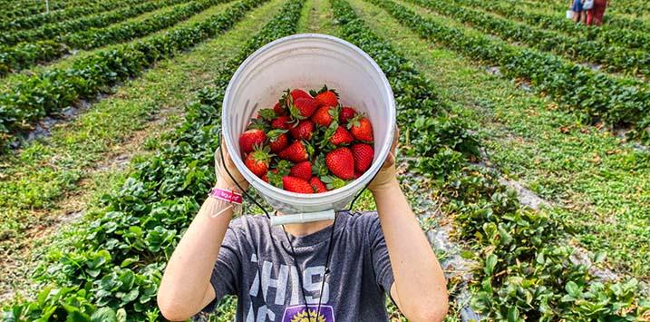 13112020_Fruit picking farm